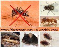 Kiểm soát côn trùng ruồi muỗi kiến gián...