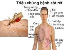 Phòng chống bệnh sốt rét
